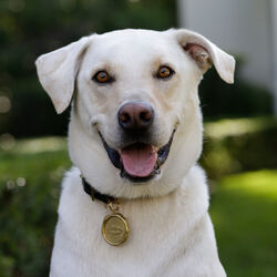 LIAISON DOG COLLAR & TAG MEDIUM