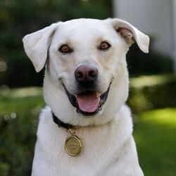 LIAISON DOG TAG MEDIUM