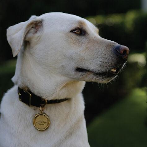 LIAISON DOG TAG SMALL